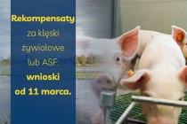 Rekompensaty-za-kleski-zywiolowe-lub-ASF-wnioski-od-11-marca-informacja-prasowa