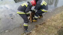 Owczarek niemiecki uratowany przezwieluńskich strażaków