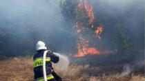 Wokolicach Skrzynna iDębca doszło dodużego pożaru lasu inieużytków