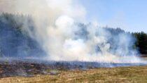 Ponownie płonie las wgminie Ostrówek