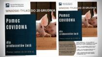 Pomoc dla producentów trzody chlewnej. Wnioski do20 grudnia
