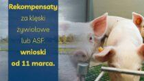 Od11 marca wnioski orekompensaty zaklęski żywiołowe lub ASF