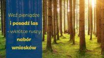 Weź pieniądze iposadź las – wkrótce ruszy nabór wniosków