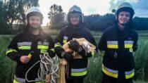 Strażacy ruszyli napomoc młodemu bocianowi. Ptak wypadł zgniazda
